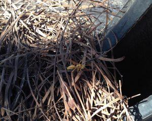 wasp visit