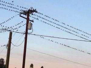 birds on the phone line